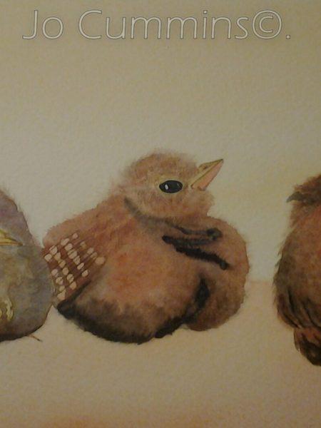 wren fledgings